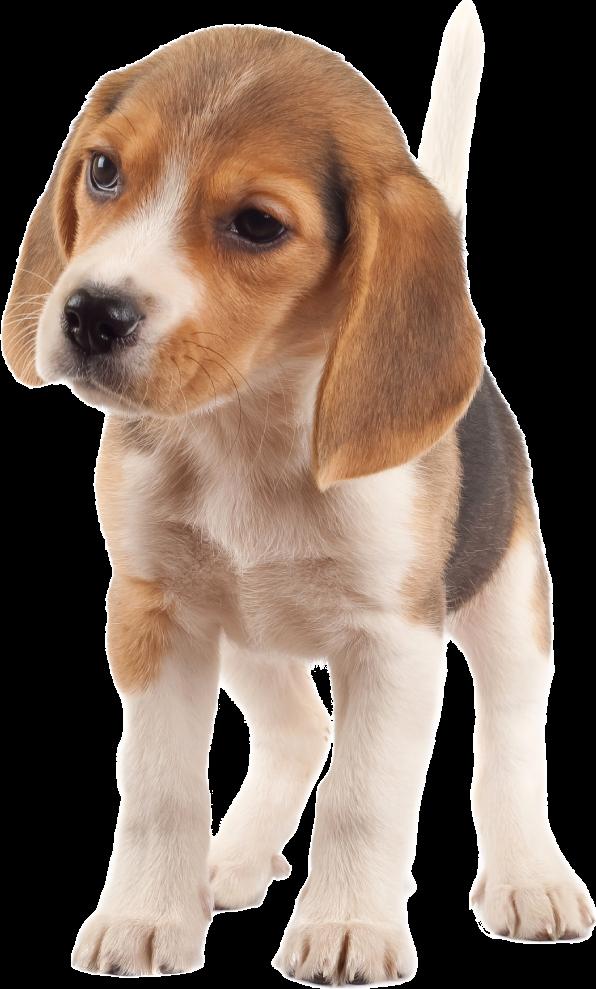 GreenAcres Dog